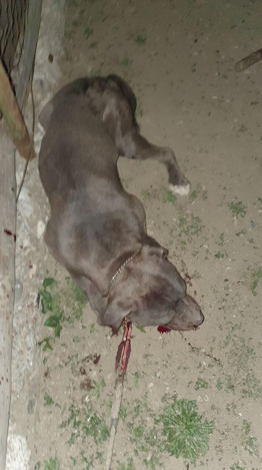ORIBIL! Câine bătut cu bestialitate cu o SAPĂ în apropiere de Cluj. ATENȚIE! Imagini care vă pot afecta emoțional!