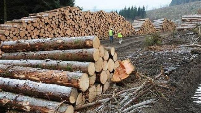 """Exportul de buștean, INTERZIS pentru UN DECENIU. """"Jaful pădurilor trebuia oprit cu orice preț!"""""""