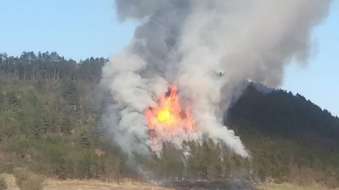 Incendiu de pădure lângă Nădășelu. Intervenția a durat aproape 10 ore