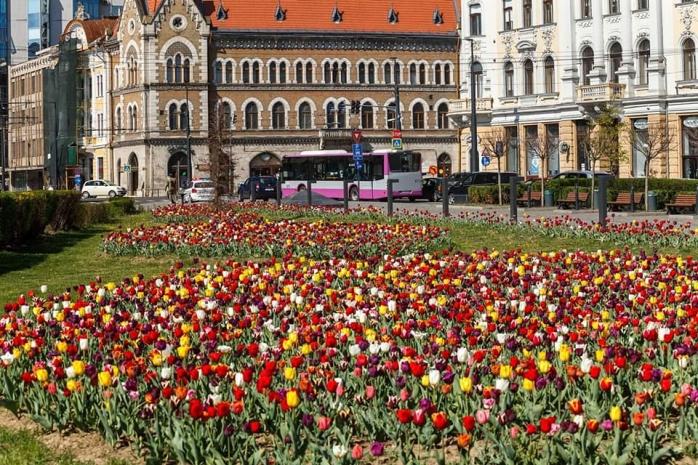 Clujul, împânzit de lalele. Așa arată mult visatul oraș de 5 stele. FOTO