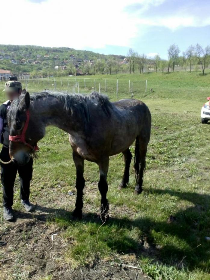 Gest INCREDIBIL! Pompierii clujeni au salvat un cal care căzuse într-o groapă