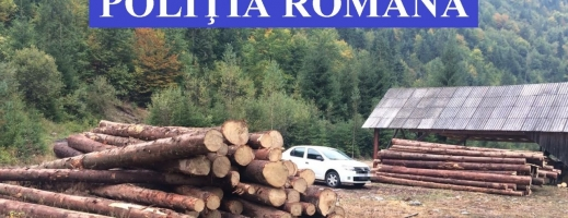 Amenzi de peste 70.000 lei, lemne confiscate după o razie a polițiștilor în județul Cluj, sursă foto: IPJ Cluj