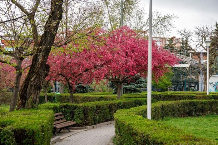 """Cluj-Napoca a înflorit! Orașul s-a """"îmbrăcat"""" în culori de primăvară - FOTO"""