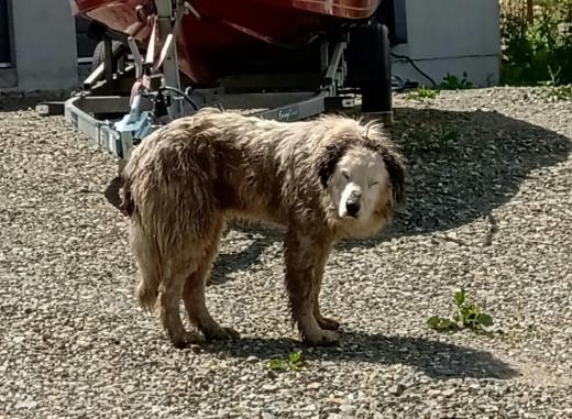 Pompierii clujeni au salvat viața unui câine