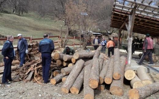 trei-barbati-retinuti-pentru-trei-arbori-taiati-ilegal-ce-au-gasit-politistii-la-locuintele-lor, foto: Arhivă