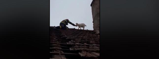 Pompierii au salvat un ied de pe un acoperiș