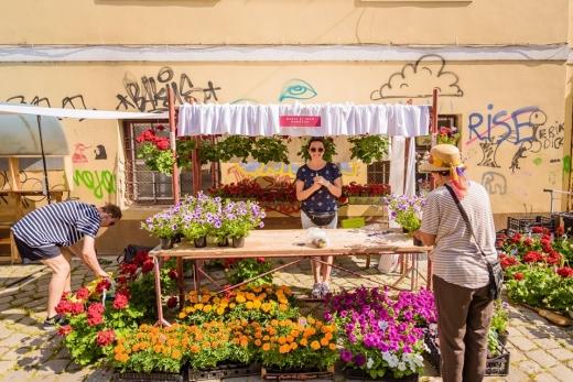 Potaissa - Piața de Flori