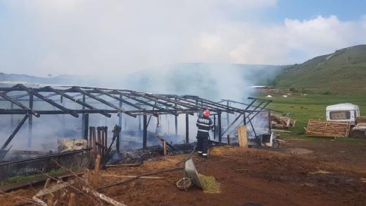 Un adăpost de animale a fost INCENDIAT INTENȚIONAT. Pompierii s-au luptat cu flăcările peste trei ore