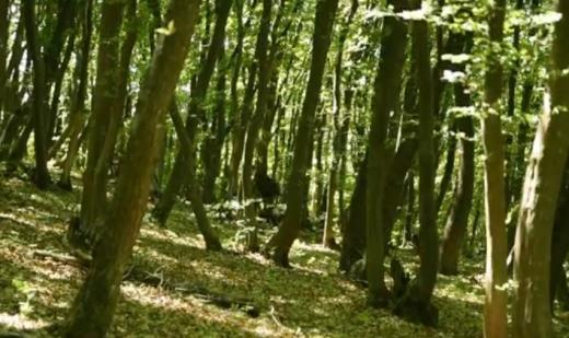 """20 de hectare de pădure vor fi """"rase"""" de Centura Metropolitană în Făget. Ce soluții sunt?"""