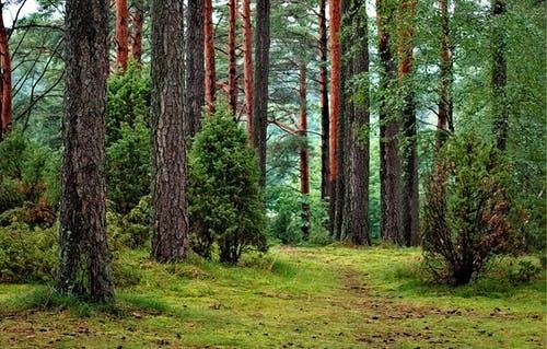 Jandarmii au salvat două femei care s-au rătăcit în pădure culegând ciuperci