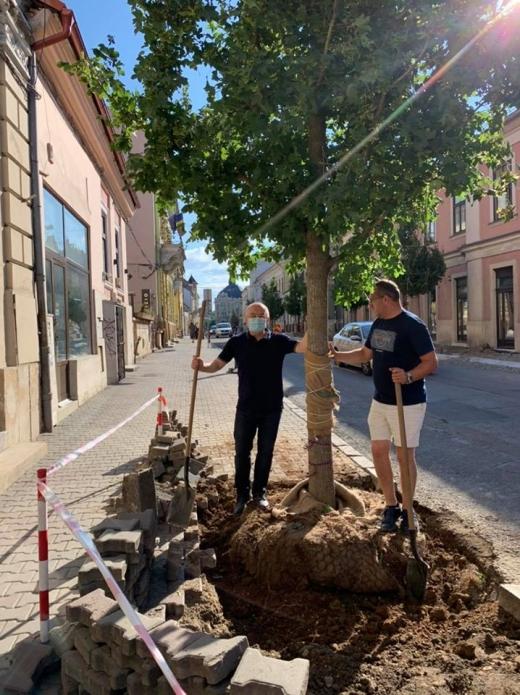 Copaci plantati pe strada Napoca