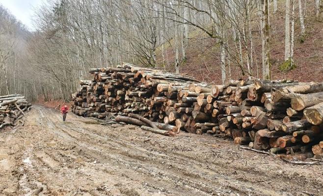 """Liber la """"măcel"""" în păduri? Avertisment de la Cluj: Deputații ar putea elimina prevederile legate de protejarea pădurilor din parcurile naționale, adoptate în Senat"""