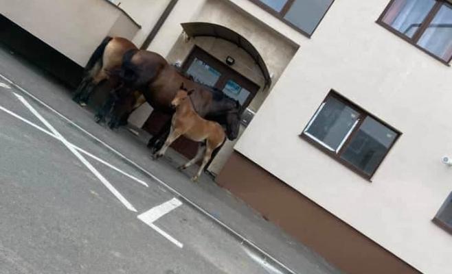 Animalele se plimbă nestigherite pe străzile din Florești