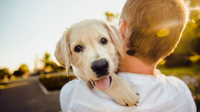 STUDIU Coronavirus se poate transmite de la oameni la câini și pisici