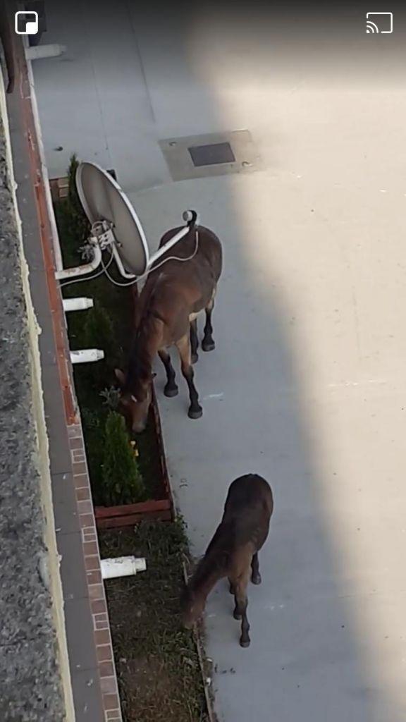 Caii din Florești continuă să se plimbe liberi