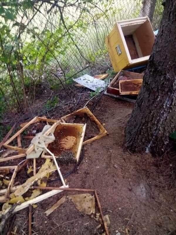ATENȚIE! Un urs terorizează clujenii din comuna Ciurila. Zilele trecute a distrus o stupină