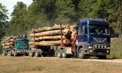 Dispar pădurile Clujului! Zeci de dosare penale pentru tăieri ilegale