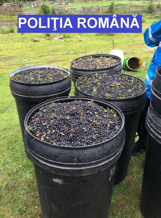 Peste 500 de kilograme de afine și 80 de kilograme de ciuperci, confiscate de polițiști