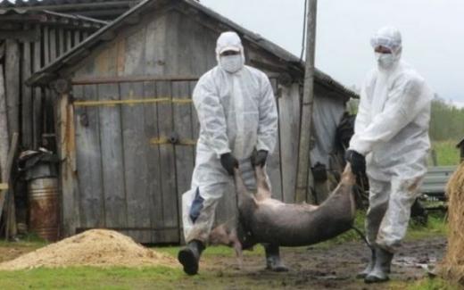 După coronavirus, o altă epidemie pândește Clujul. Tot mai multe focare la graniță cu județul