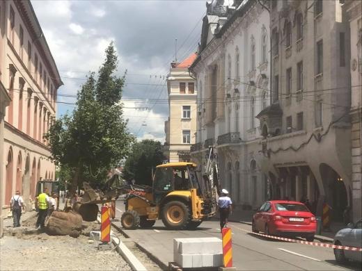 Se iau noi măsuri pentru protejarea arborilor de pe strada Napoc