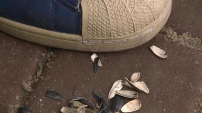 Nesimțirea se plătește! Student amendat cu 1.000 de lei pentru că a scuipat coji de semințe pe jos