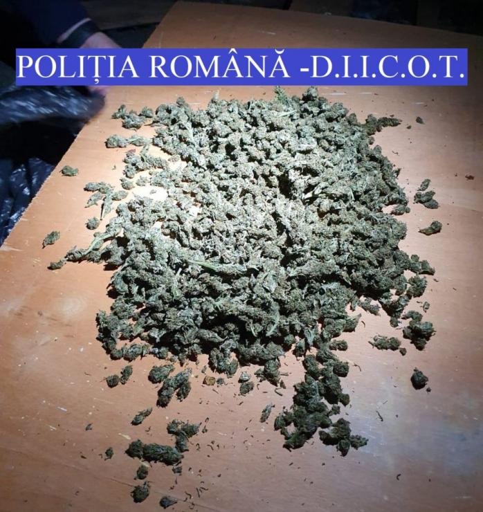Peste 10 kg de CANNABIS confiscate la Cluj
