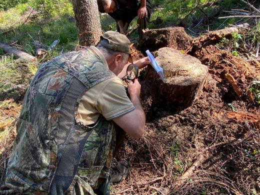 """DNA-ul Pădurilor, RESPINS de Curtea Constituțională: """"Mafia pădurilor să nu se bucure!"""""""