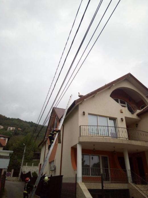 O gâscă a rămas pe acoperișul unei case din Grigorescu! Pompierii au sărit în ajutorul ei