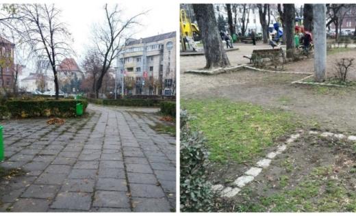 Petiție online împotriva tăierii copacilor din Piața Ștefan cel Mare