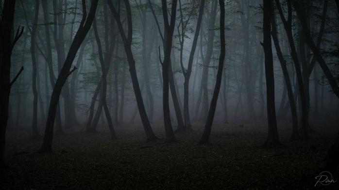 Fotografii înfricoșătoare cu Pădurea Hoia-Baciu! Toamna îi aduce o imagine mai întunecată