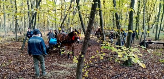 """Pădurea Hoia-Baciu, plină ochi de hoții de lemne. Cel care i-a demascat, AMENINȚAT cu drujba. """"S-a oprit la 5 cm de gâtul meu"""". FOTO/VIDEO"""