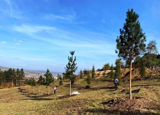 Extinderea Parcului Etnografic prinde contur. Au fost plantați primii arbori pe pajiștea învecinată - FOTO
