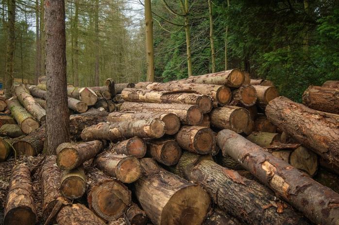 Hoț de lemne, prins în urma unor tăieri ilegale, condamnat la 4 ani de ÎNCHISOARE! Se face dreptate pentru pădurile Clujului?