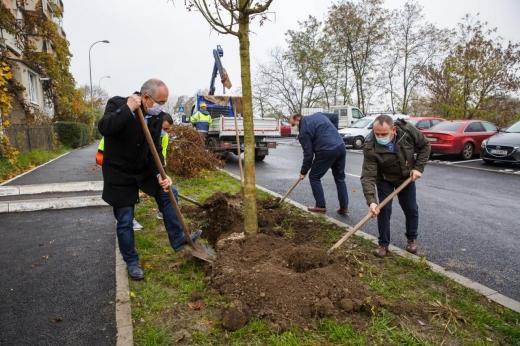 CLUJUL VERDE: Peste 1.000 de arbori plantați în 2020. Au început plantările în cartierul Între Lacuri