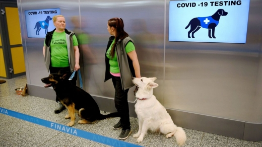 """Câinii ar putea deveni esențial în oprirea răspândirii coronavirusului. Cum funcționează """"testul canin"""" pentru COVID19?"""