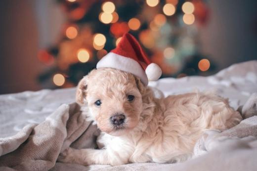 """Rata abandonului de animale după sărbători crește în fiecare an. """"Cadoul"""" perfect de Crăciun vine la pachet cu responsabilități!"""