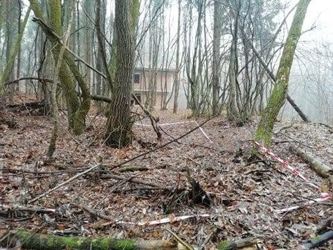"""Tăieri ilegale, gunoaie și case noi în Pădurea Făget. Dohotaru: """"Mă revoltă ce se întâmplă! Este clar că iubim diferit pădurile"""". FOTO"""