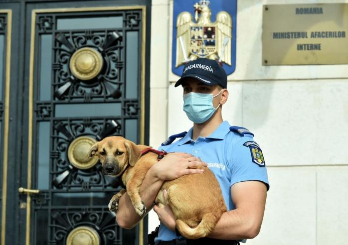Respins de la concurs pentru un motiv PENIBIL. Postul de la Poliția Animalelor, refuzat unui candidat din cauza birocrației.