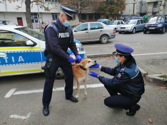 Poliția Animalelor este o structură nou înființată și foarte tentantă pentru tineri