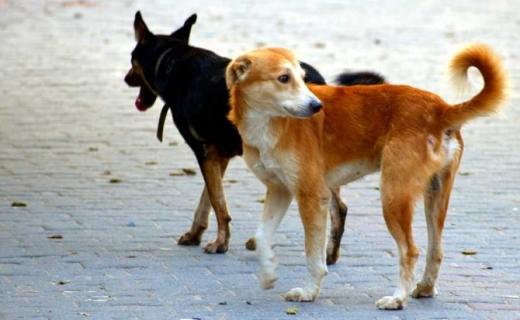 Dispar câinii fără stăpân din Apahida! Anunț important pentru toți localnicii