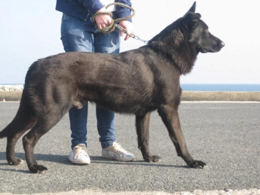"""Câine legat în fața unui mall din Cluj, pentru 50 de minute. Jandarmii, chemați pentru că era abandonat """"de câteva ore"""""""