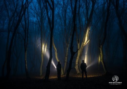 """Pădurea Hoia Baciu, de la legende, la adevăr. Care e explicația formelor """"ciudate"""" ale copacilor?"""