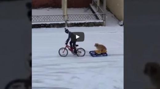 VIDEO. Un copil și-a plimbat câinele cu sania, printr-o comună din Cluj.