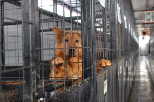 """Primăria Florești va steriliza toți câinii fără stăpân din comună. Primar: """"Sunt foarte multe animale abandonate"""""""