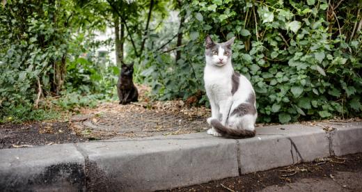 Două pisici au fost decapitate în Cluj-Napoca