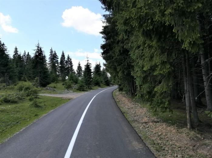 Proiect pilot pentru plantații rutiere pe drumurile din Cluj