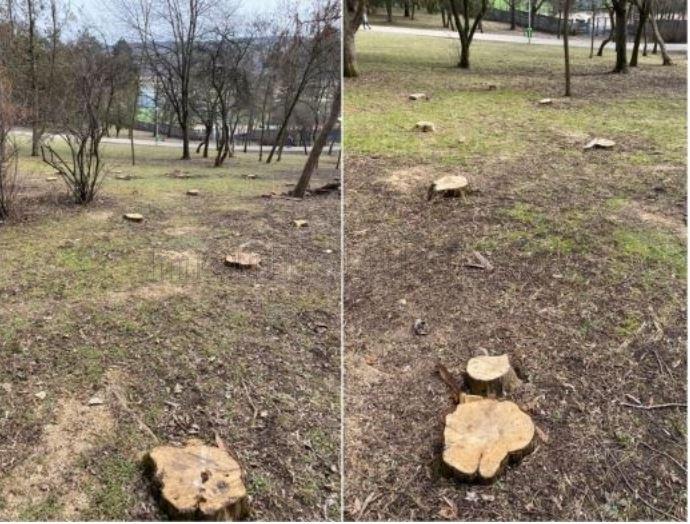 """Copacii din Parcul Detunata, """"măcelăriți"""""""