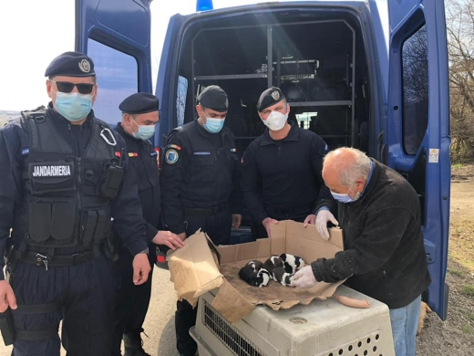 """Jandarmii din Cluj au salvat mai mulți căței abandonați la marginea orașului: """"Ne implicăm pentru că ne pasă"""". GALERIE FOTO"""