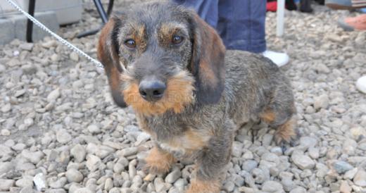 Unul dintre proiectele din cadrul bugetării participative lansată de primăria Florești vizează construirea de locuri de joacă pentru câini.