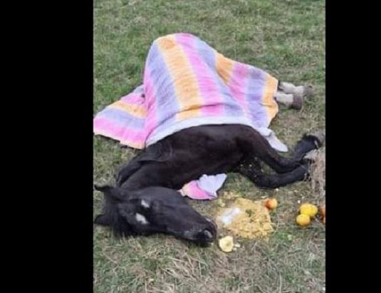 Cal leșinat pe o stradă din Cluj-Napoca. Medicii veterinari au constatat că animalul era deshidratat